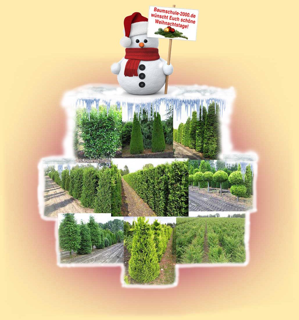 Baumschule b ume und pflanzen wie taxus thuja for Weihnachtsbaumverkauf hamburg